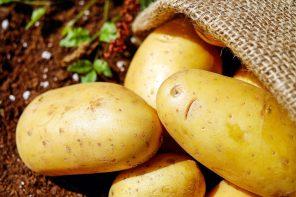 Mit – ziemniaki tuczą