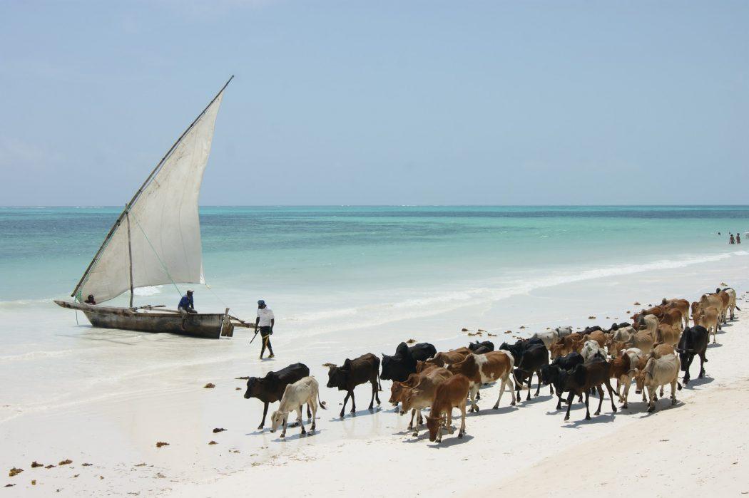magazynkobiet.pl - IMG 2072 1050x699 - Zanzibar – miejsce, którego nie da się zapomnieć