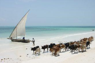 magazynkobiet.pl - IMG 2072 330x220 - Zanzibar – miejsce, którego nie da się zapomnieć