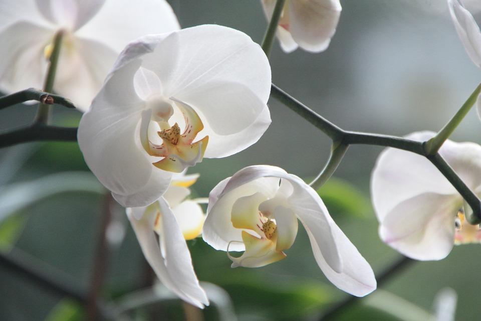 magazynkobiet.pl - orchid 4780 960 720 - Nie daj się zimie i zrób sobie egzotyczne wakacje we własnym domu  – poradnik z przymrużeniem oka