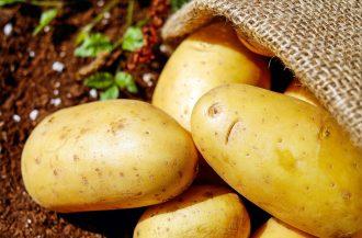 magazynkobiet.pl - potatoes 1585060 1280 330x217 - Mit – ziemniaki tuczą