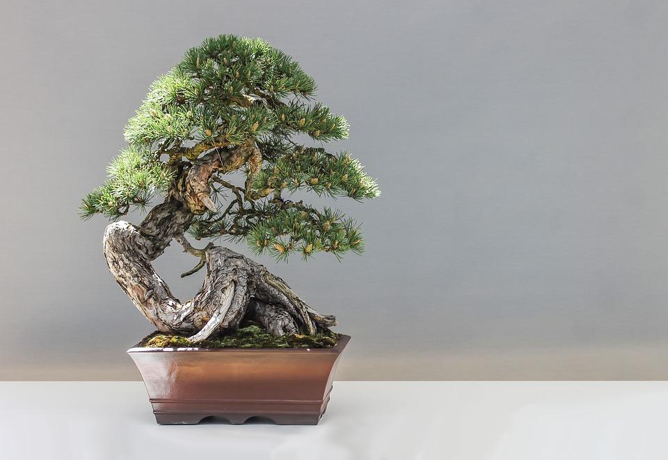 """magazynkobiet.pl - bonsai 1805501 960 720 - Wabi-sabi , czyli """"piękno w niedoskonałości"""". Najgorętszy trend 2018"""