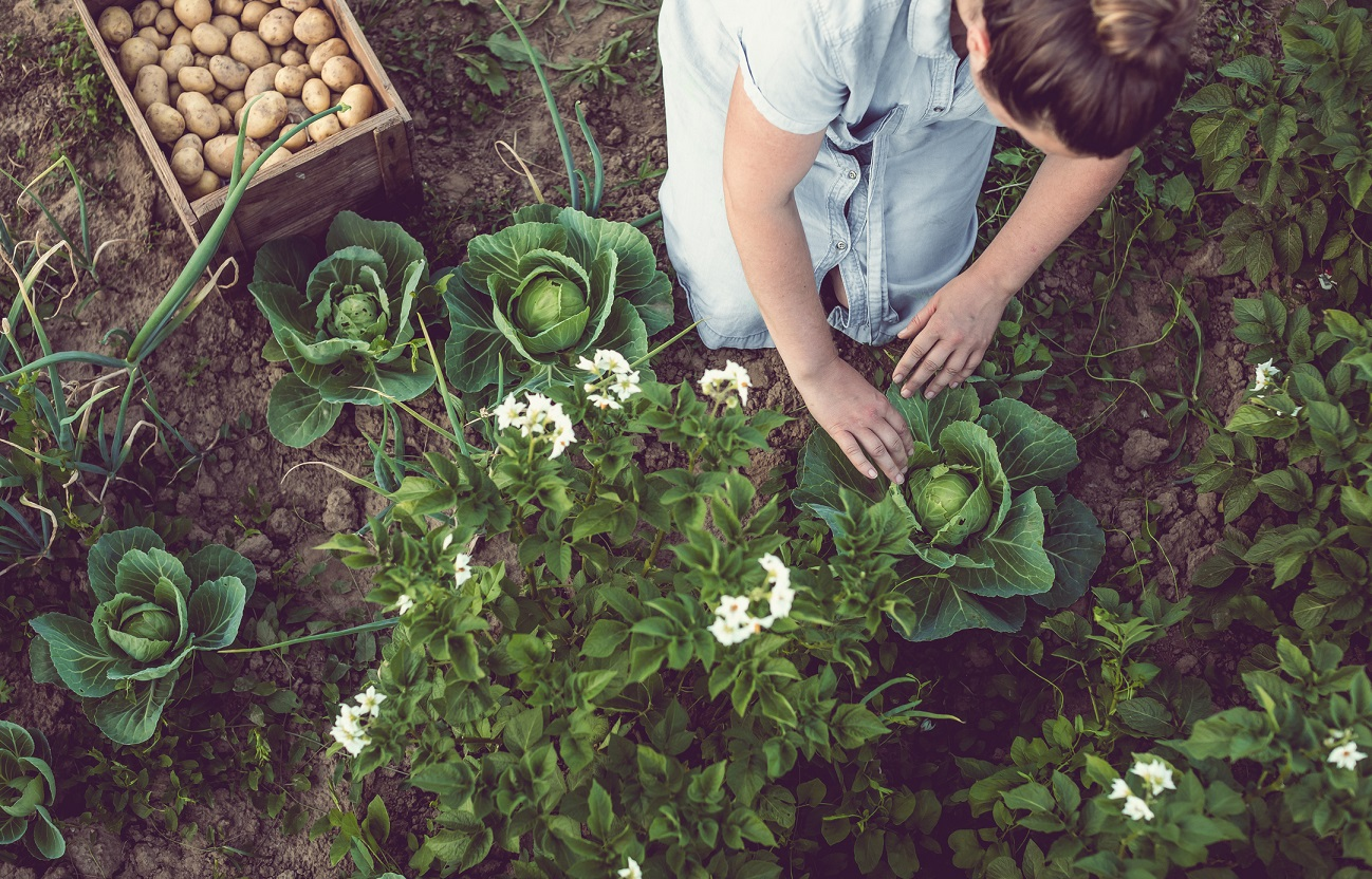 magazynkobiet.pl - Horta em casa 1 - Ogród na lata. Jak go zaplanować i urządzić?