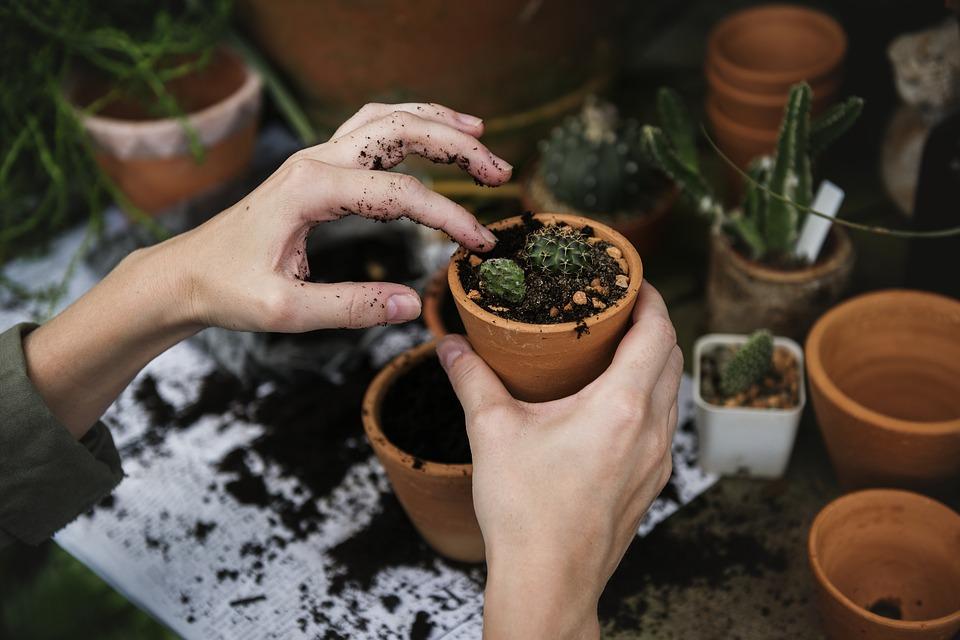 magazynkobiet.pl - ecology 2985781 960 720 - Rodzaje gleby używanej w ogrodnictwie