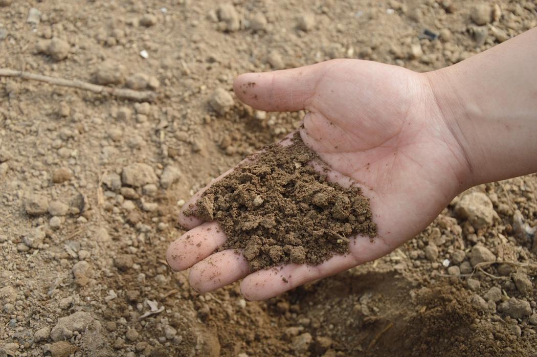 magazynkobiet.pl - gleba 1050x698 - Najpopularniejsze rodzaje nawozów ogrodowych