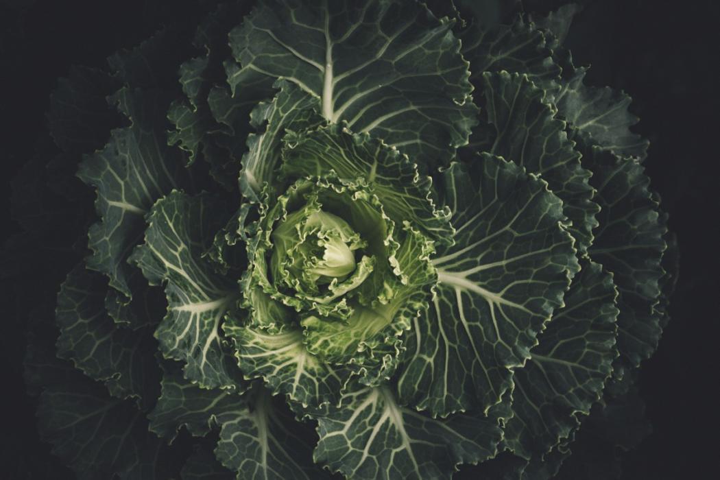 magazynkobiet.pl - image from rawpixel  fot scott webb jpeg 1050x700 - Dieta Kapuściana