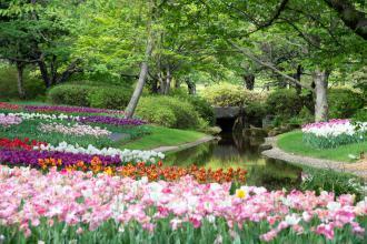 magazynkobiet.pl - photo 1598368457390 95a84ecb87c4 330x220 - Jak przez cały rok odpowiednio pielęgnować ogród?
