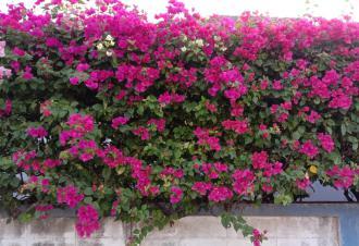 magazynkobiet.pl - Najładniejsze krzewy kwitnące które ozdobią Twój ogródek 330x226 - Najładniejsze krzewy kwitnące, które ozdobią Twój ogródek!