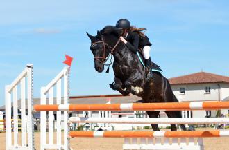 magazynkobiet.pl - horse 721136 1920 330x217 - Kask do jazdy konnej jest obowiązkowy! Dlaczego trzeba go nosić? Sprawdź!