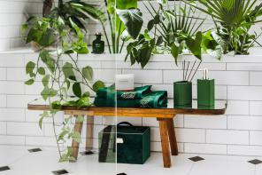 W rytmie natury – zalety roślin w mieszkaniu